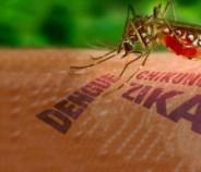Salud refuerza las acciones preventivas para evitar casos de dengue, zika y chikungunya