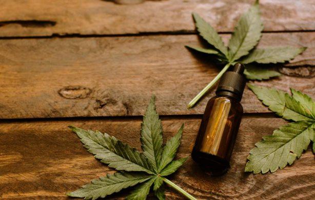 El debate sobre la regularización y control de la producción de aceite de cannabis